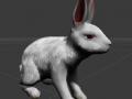 Rabbit Character  Update