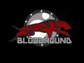 Bloodhound update 1
