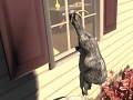 Goat Simulator in da works