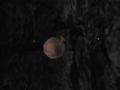 Galaxang52 update