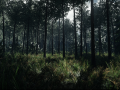 Land scape for Rupture the game