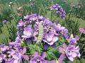 Milkweed plants released, Sandbox mode gets new content!