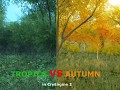 Tropics VS Autumn. TRY AND COMPARE