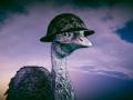 Emu War! Steam Reveal Trailer