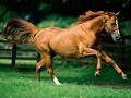 Horse Born
