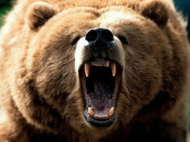 Bear Model Pack for CoC v1.0