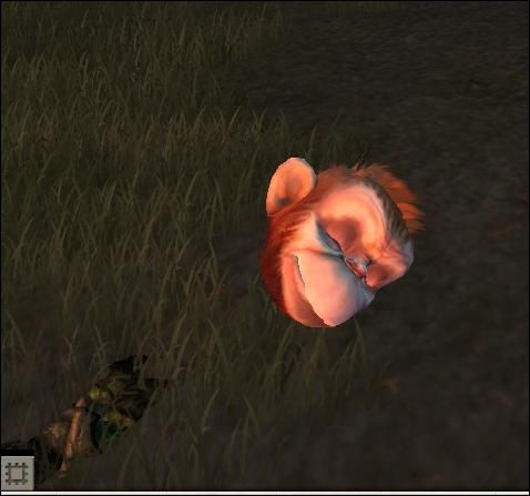 Apes Head