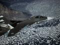 Su-30SM varied squadron schemes