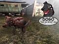 Not so blind dog