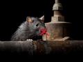 Quiet Rats