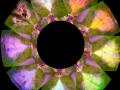 Spyro Flame Colors