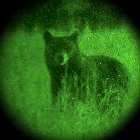 S.T.A.L.K.E.R. Anomaly FLIR Night Vision HUD