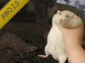 AWO Rat Fix
