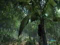 JungleIsland