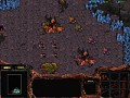 The Complete Zerg Campaign Co-op Beta