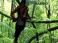 John Rambo Public Use Model
