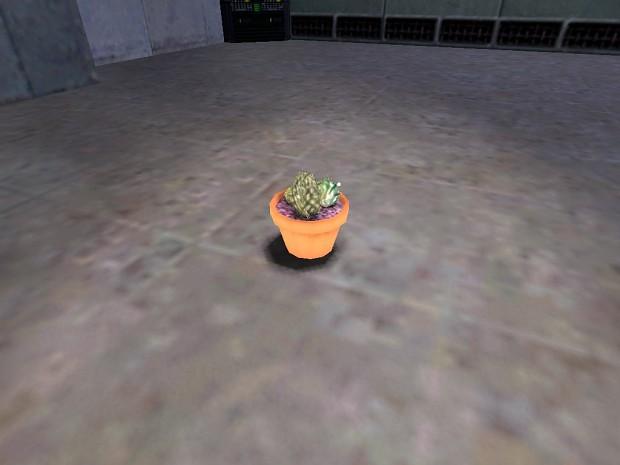 Jumping Cactus Sent
