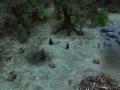 Fangorn Forest Again