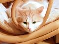 Cute Cats in HD