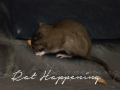 Rat Happening (Linux)