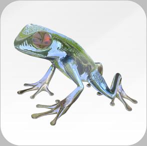 FrogThumbnail 4