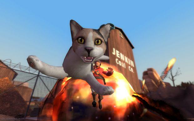 Cat Launcher