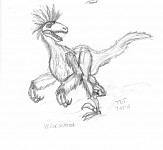 Raptor With Feathers