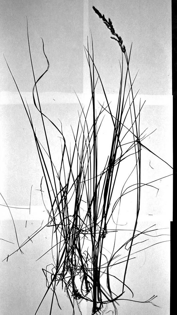 How we create REFUSION_#01: Grass