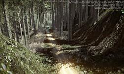 The Shady Road
