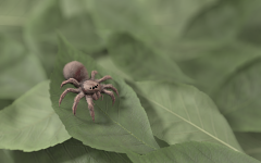Spider on Leaves