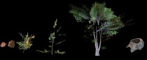 VegetationGrowth