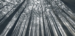 foliage test