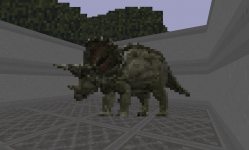 Male Triceratops