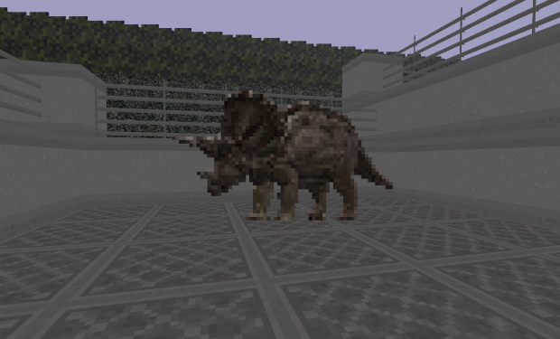 Female Triceratops