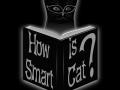 How Smart is Cat