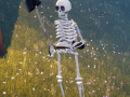 The Skeleton War