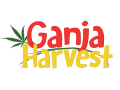 Ganja Harvest