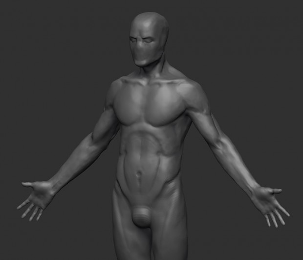 male anatomy wip