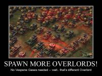 Spawn More Overlords!!