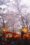 Hirano Shrine, Kyoto 平野神社,京都-20140402
