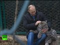 Putin enters leopard cage at Sochi National