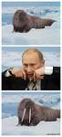 Putin and walrus