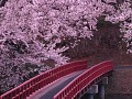 Sakura | Easter European Arrangement