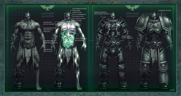 Astartes Anatomy Image - Warhammer 40k Fan Group