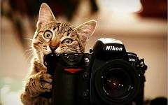 camera-cat