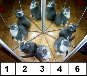 How many cats are there in real ?_? O_o =D =P XD