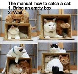 Easy way to catch a cat... =S =D =P XD