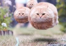 Kitten balloons!