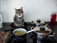 My tomcat