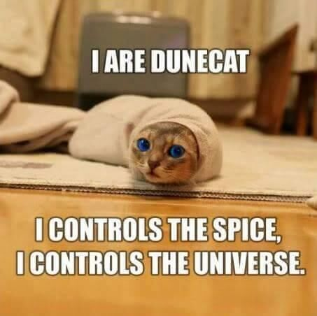 Dune Cat